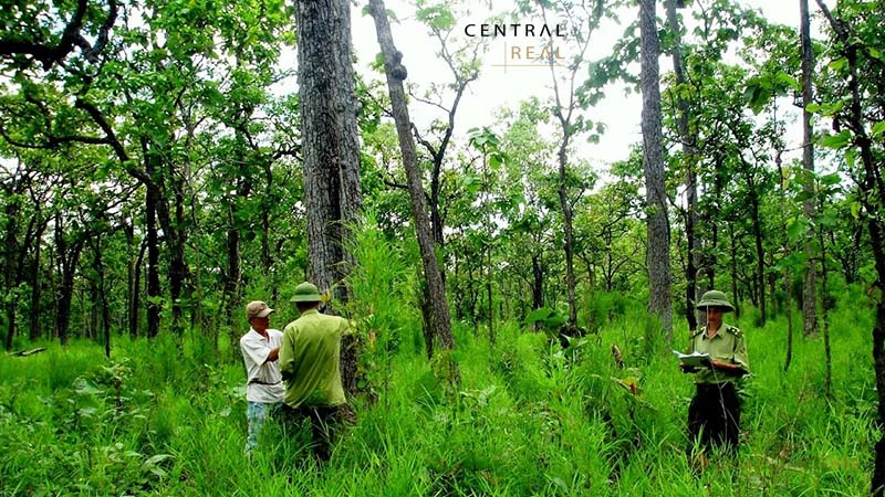 Muốn xây dựng nhà trên đất rừng sản xuất phải thực hiện chuyển đổi mục đích sử dụng