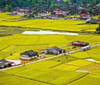 Không được xây dựng nhà ở trên đất nông nghiệp