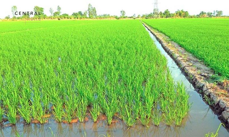 Đất nông nghiệp là đất thuộc quyền sở hữu và sử dụng của người dân
