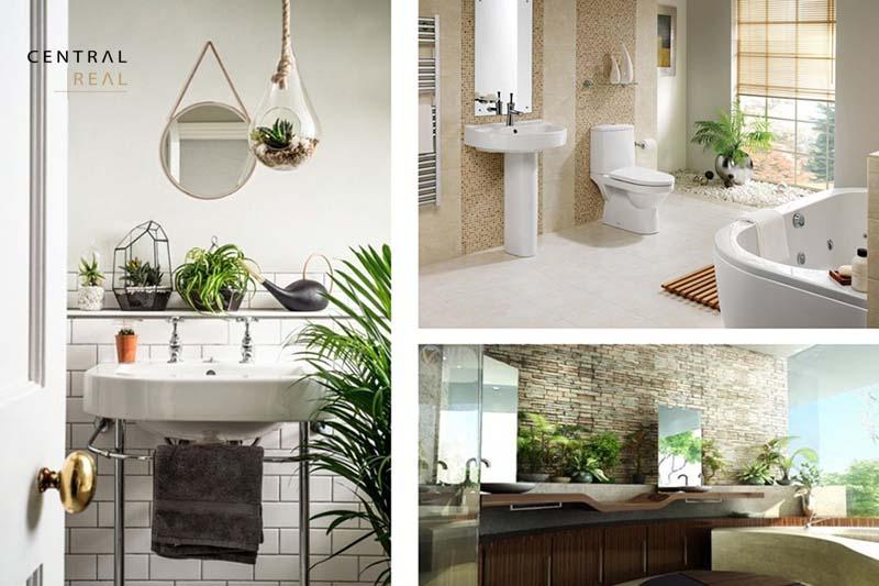 Trang trí phòng tắm với cây xanh thêm thư giãn và có tác dụng hút ẩm