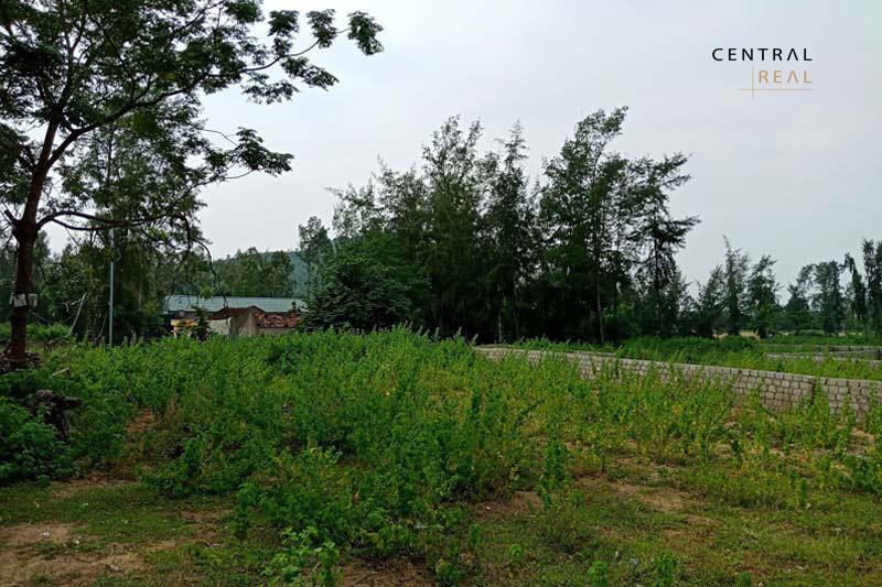 Điều kiện để chuyển mục đích sử dụng đất CLN