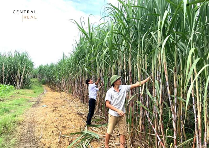 Đất HNK là một loại đất được sử dụng chủ yếu cho mục đích để trồng các cây nông nghiệp ngắn hạn