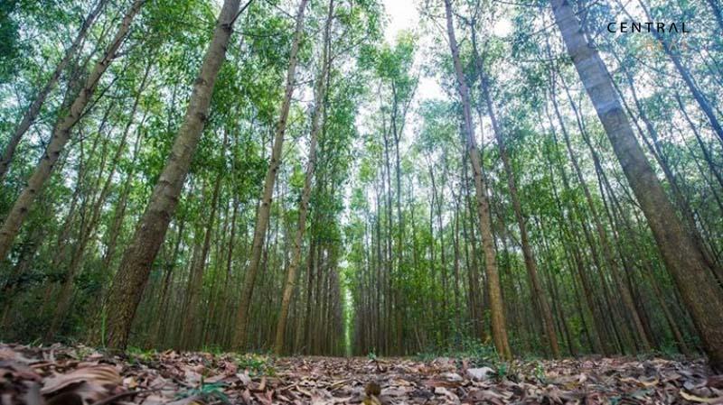 Đất rừng sản xuất là loại đất được sử dụng cho mục đích sản xuất nông nghiệp