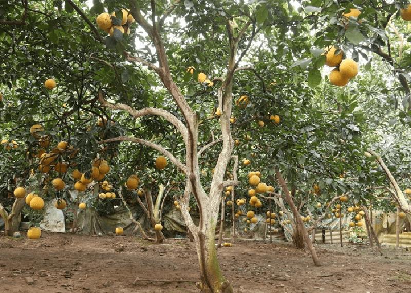 chuyển đổi đất trồng
