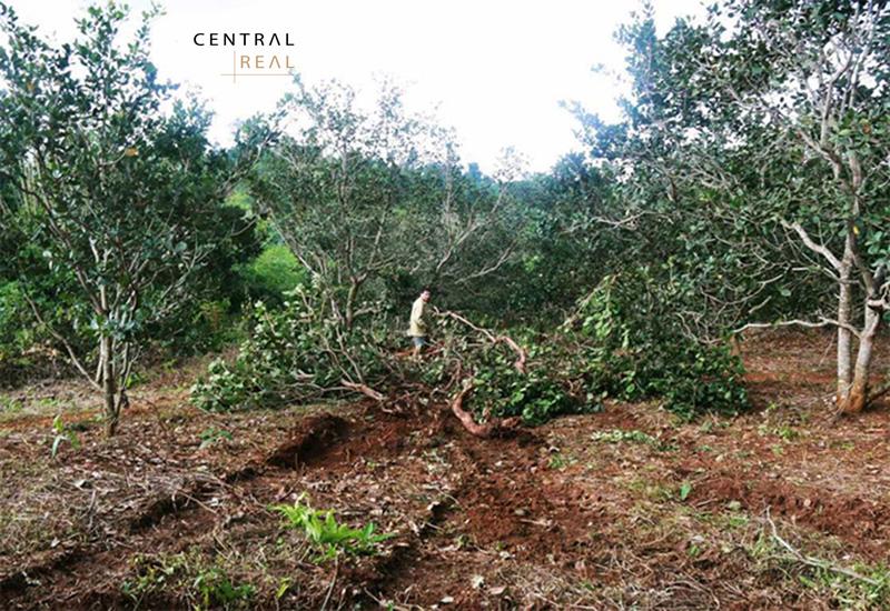 Các loại cây lâu năm ở đất CLN đều có vai trò khác nhau