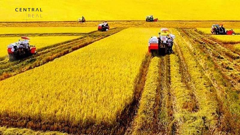 Phương pháp tính diện tích đất theo m2 trên nền đất nông nghiệp